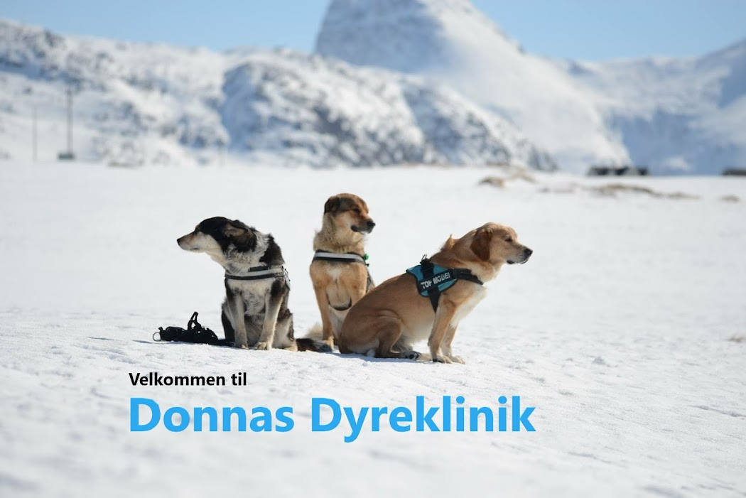 Donnas Dyreklinik