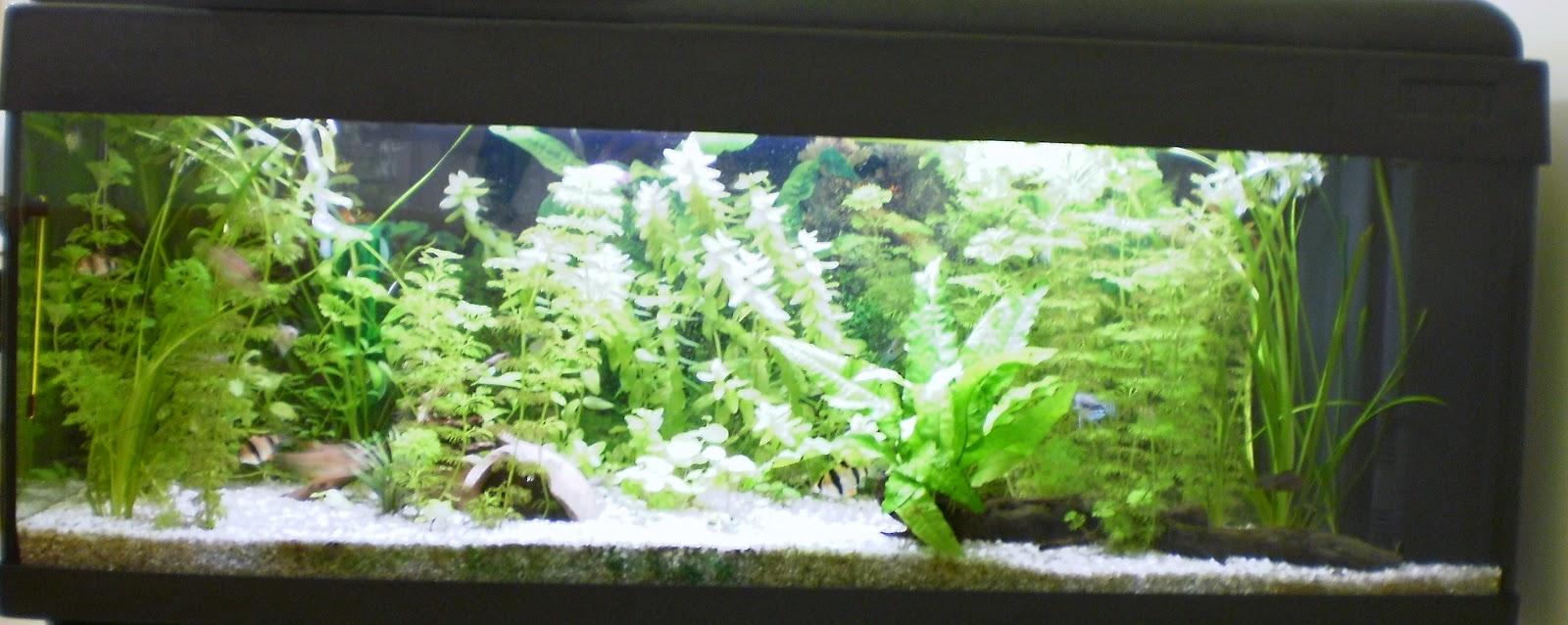 La vetrina arcobaleno acquario attrezzatura necessaria for Solo piante