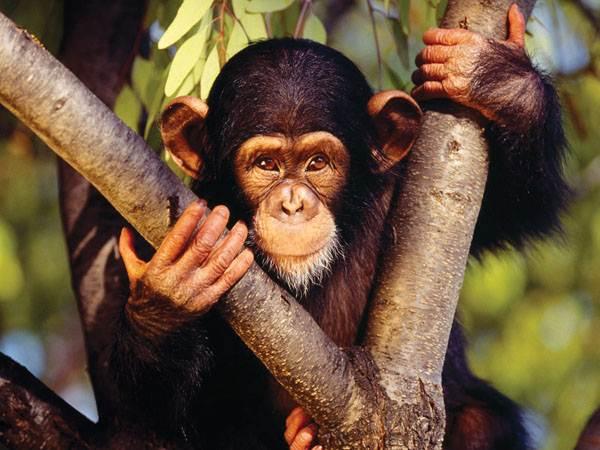 Τα 10 εξυπνότερα ζώα στον κόσμο
