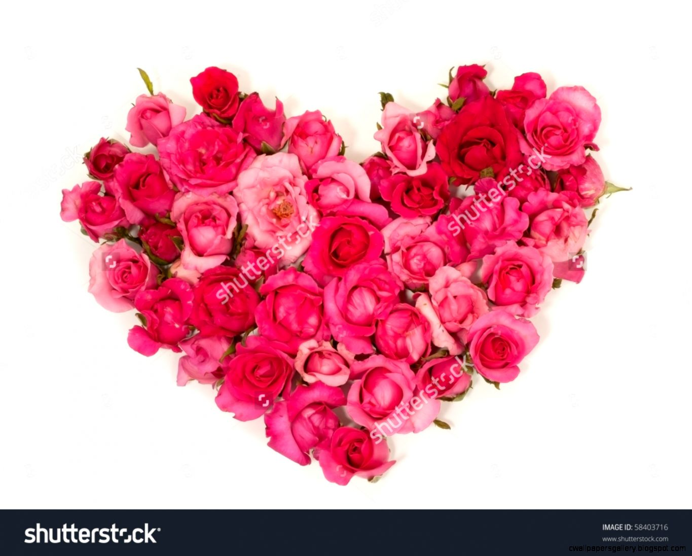 Pink Roses Heart  White Background Stock Photo 58403716