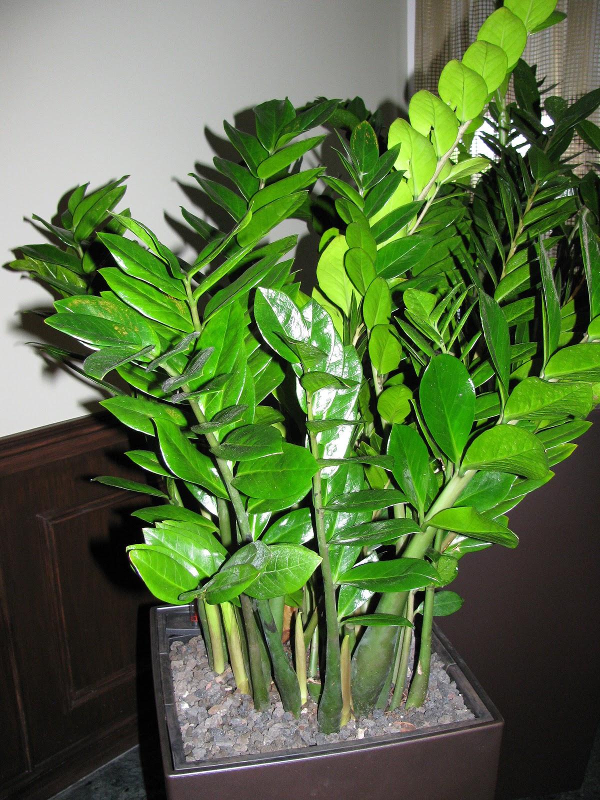 Растения для южных окон 21