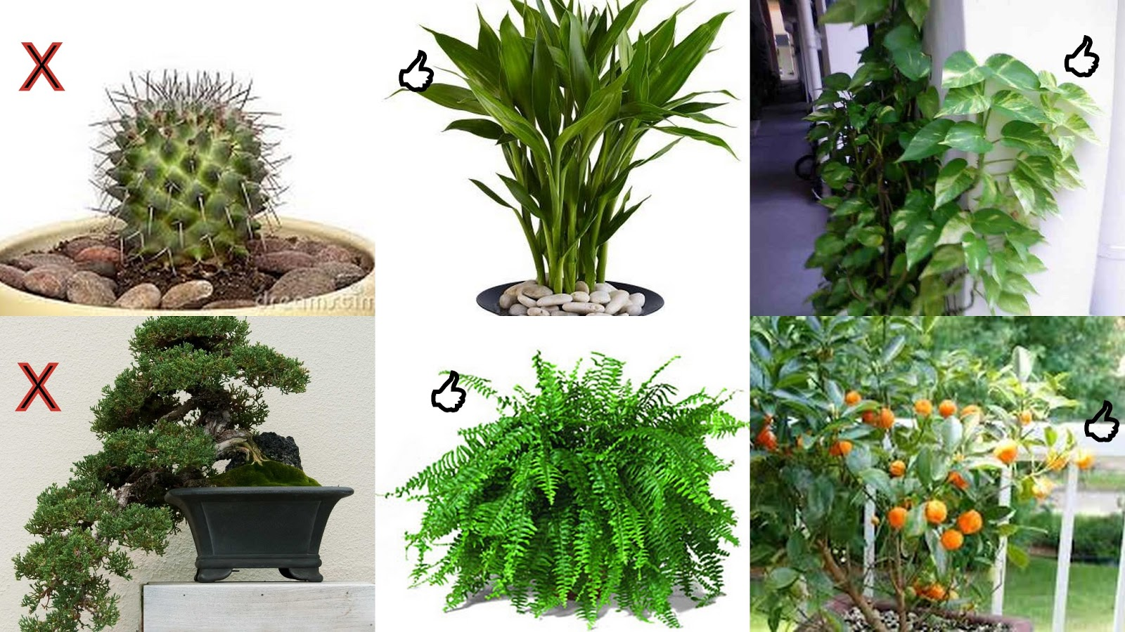 New Ideas VASTU SHASTRA AND PLANTS