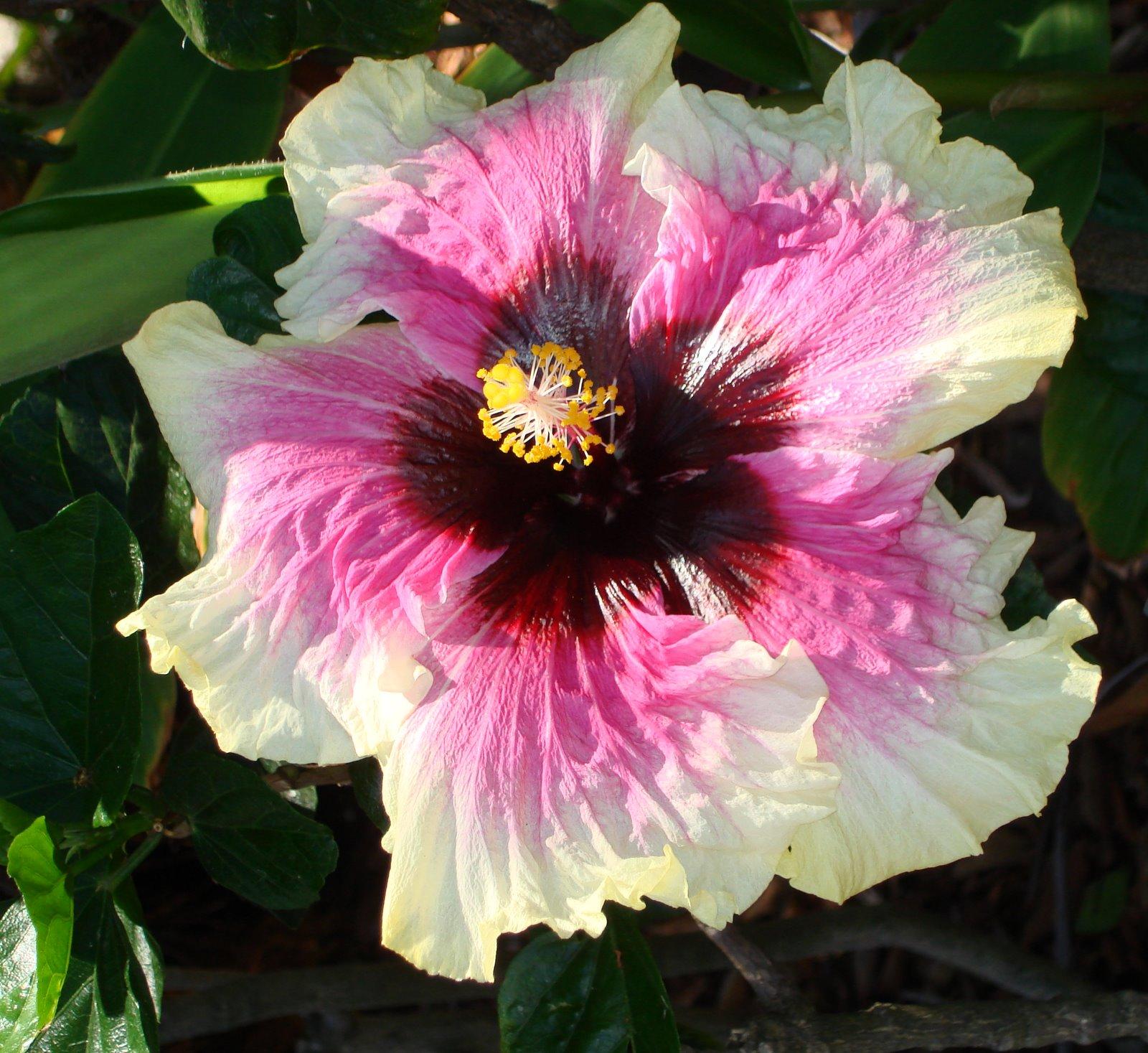ForGetMeNot Gorgeous I Mean GORGEOUS Hibiscus Mellow Yellow Macro Monday
