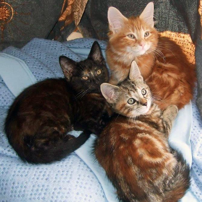 Hobbes, Darwin & Emily