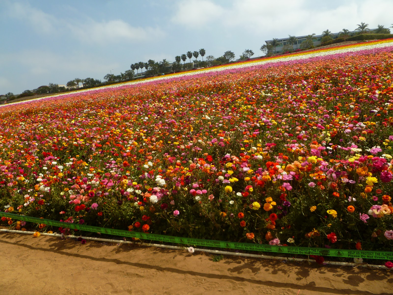 Image result for Flowerfield In Carlsbad california