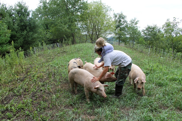 Pastured pigs at Kinney Valley Alpacas