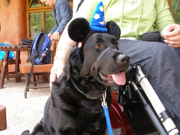 Cute dogs (50 pics), dog pictures, dog wears mickey mouse's hat