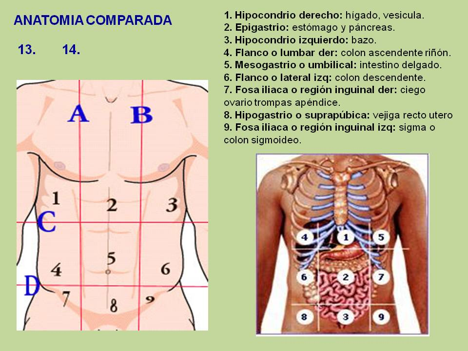 Biología didáctica: mayo 2012