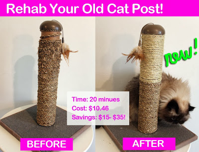 Rehab-Cat_Pole_01