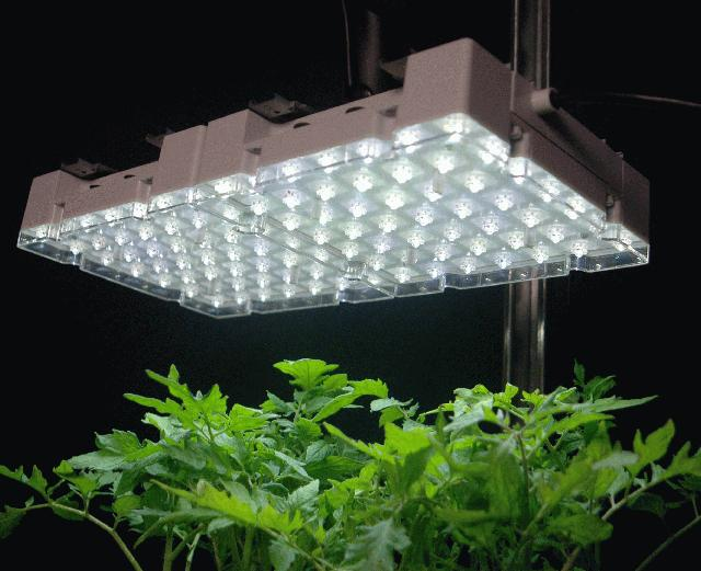 Indoor grow lights mouade agafay for Indoor gardening videos