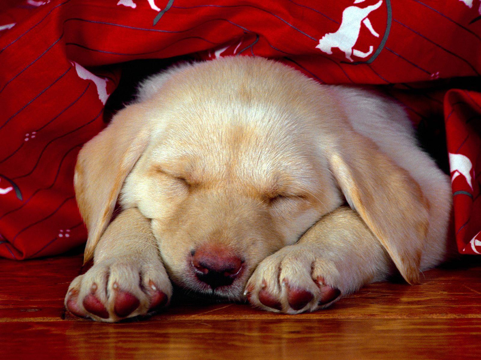http://3.bp.blogspot.com/-RgrPvA_K4yQ/T9mVZCv3k0I/AAAAAAAAGzg/jKNLHp6k7Cc/s1600/Dog+Wallpaper+065.jpg