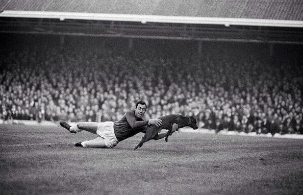 Leceister City's Gordon Banks stops a canine pitch invader