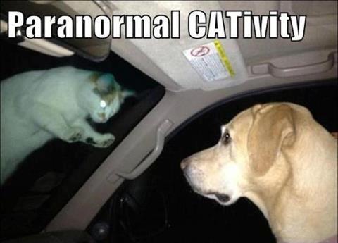 Paranormal+Cat.jpg