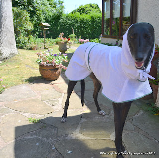 Greyhound and Whippet Summer Cool Coat 100% pure linen look cotton