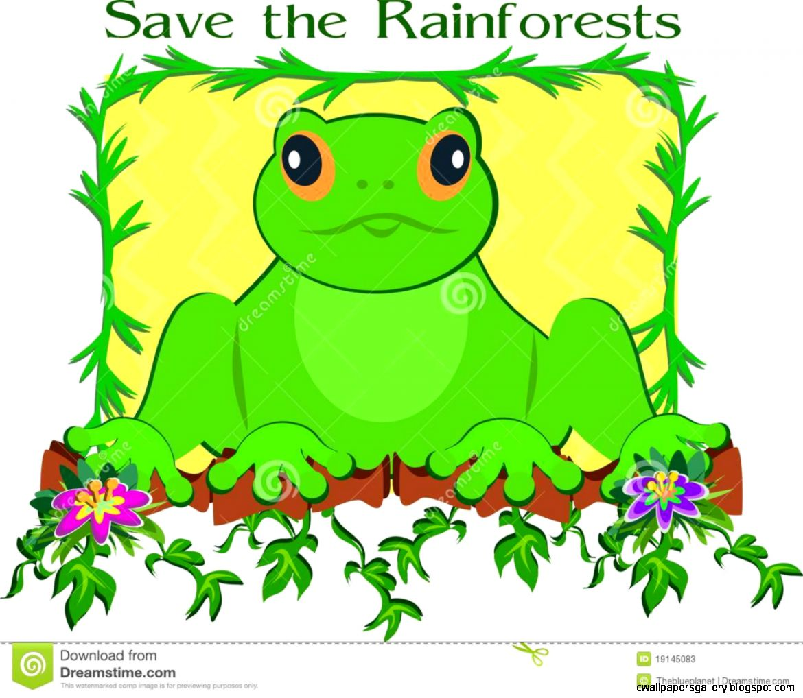 Save The Rainforest Frog Stock Photos   Image 19145083