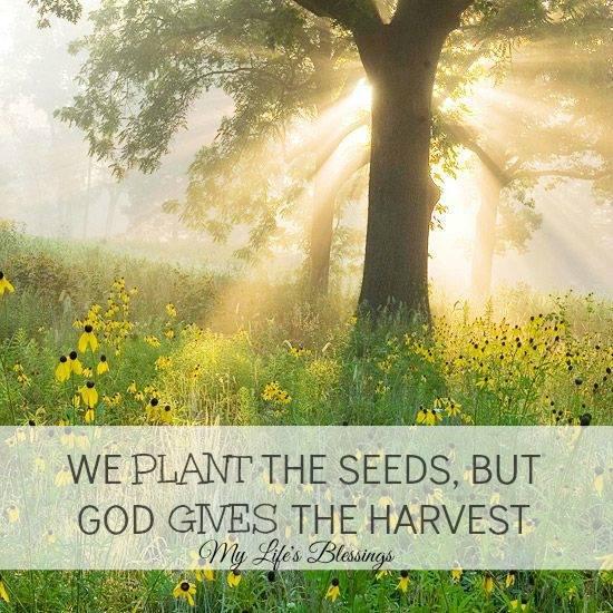 God gives the harvest