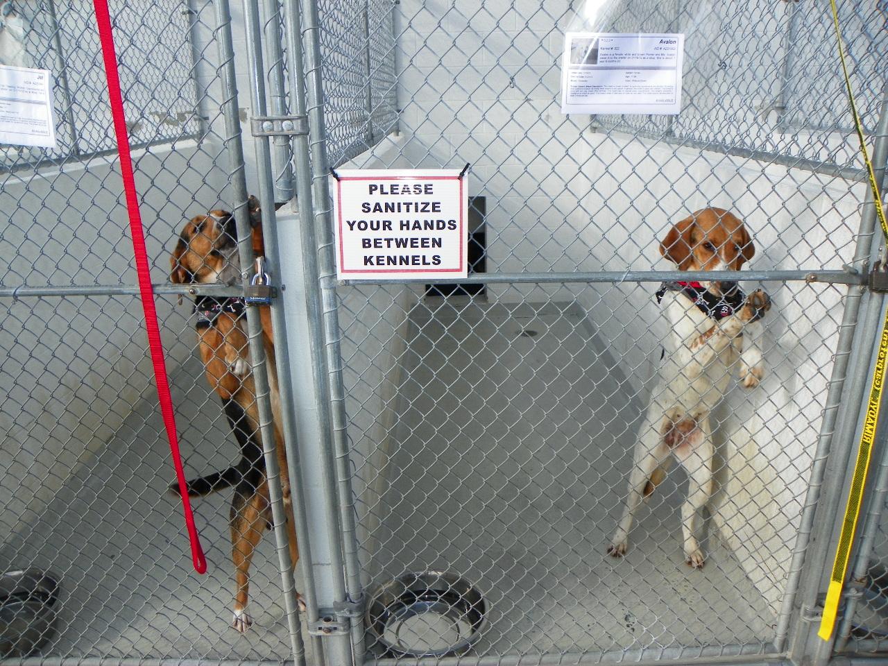 Animal Services - Sonoma County, California