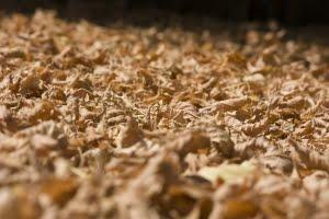 Mulch in the garden saves water.