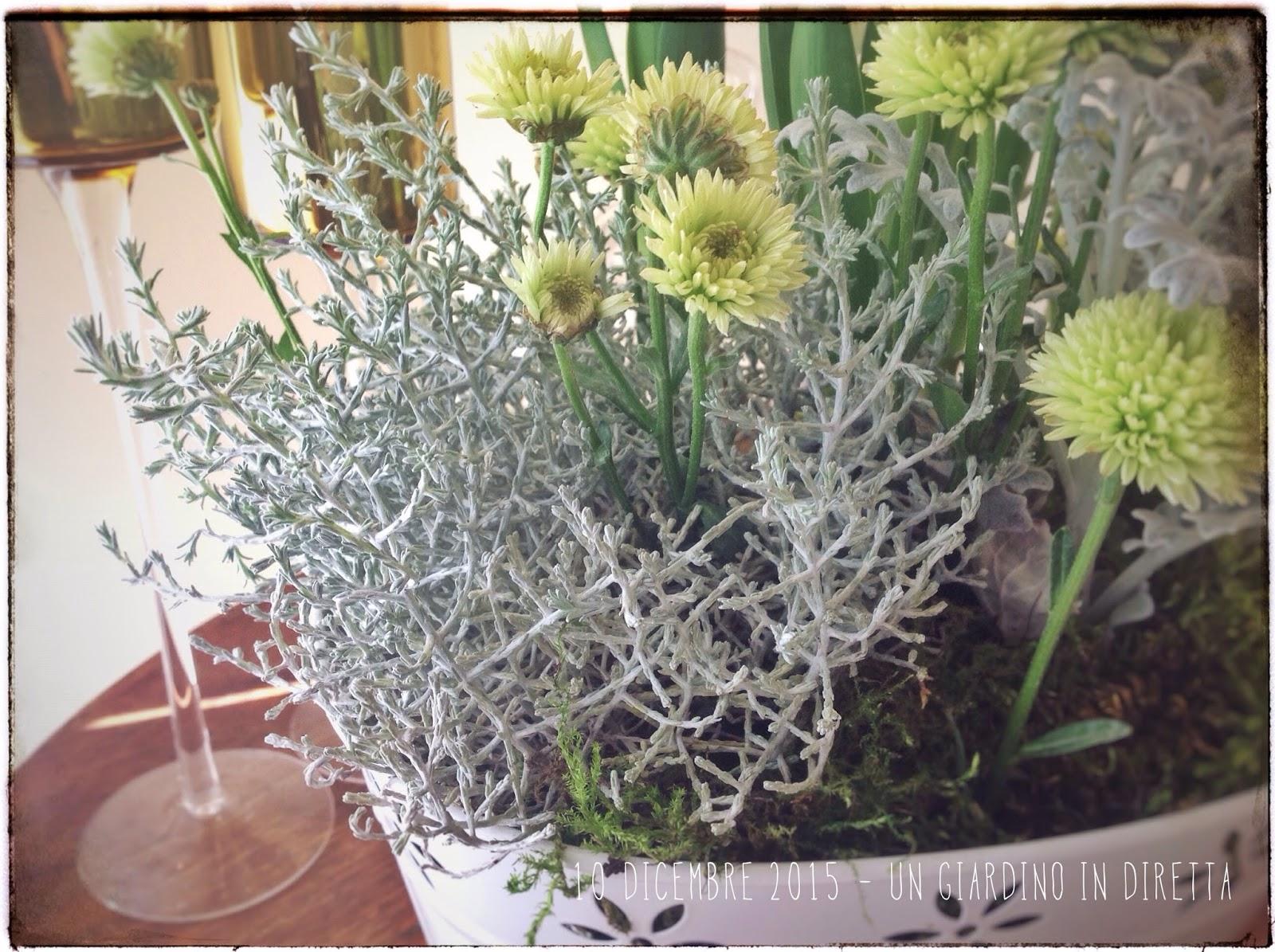 Fai da te una composizione di piante per natale un - Composizione giardino ...