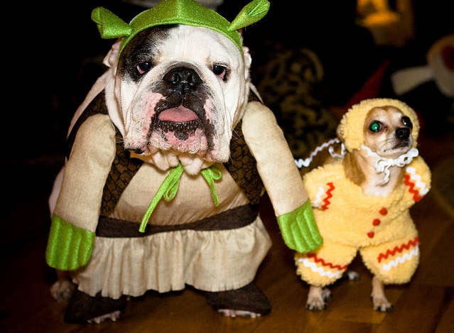 Funny bulldogs new nice photos 2012