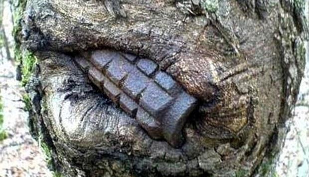 Bom Tangan Yang Tidak Meletup Sisa Perang Dunia Ii Tertanam Di