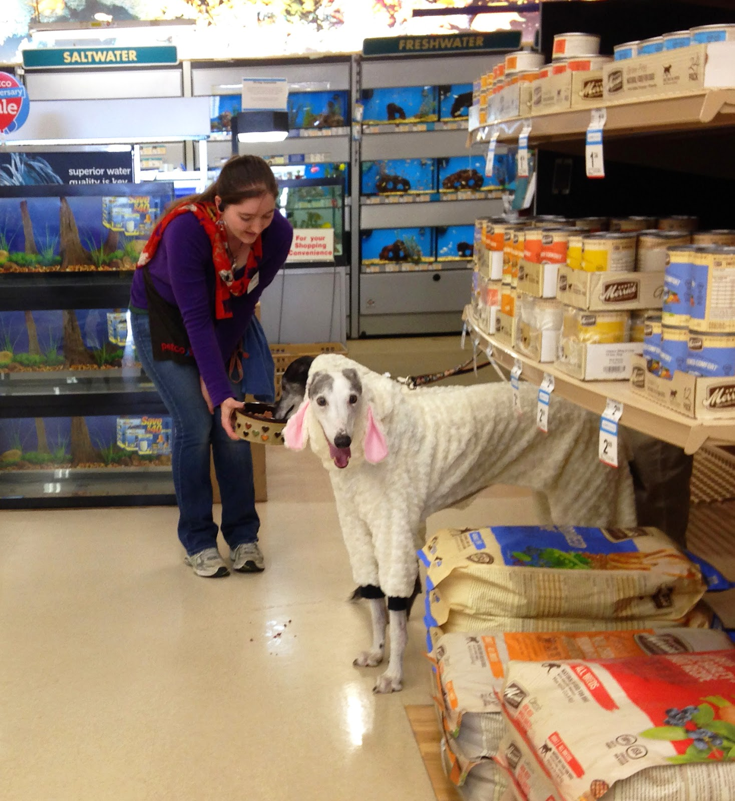 Blue and Bettina Greyhound take a victory lap around Petco