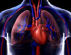 Tórax y Cardiovascular