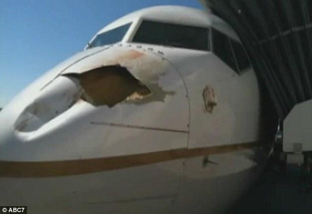 Hidung Pesawat Tertabrak Burung [ www.BlogApaAja.com ]