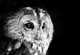 Like an owl..I must can see in the dark