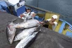 Ben Magec exige el fin del acuerdo pesquero entre la UE y Marruecos