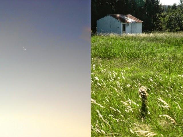 new moon - dancing grass by betitu