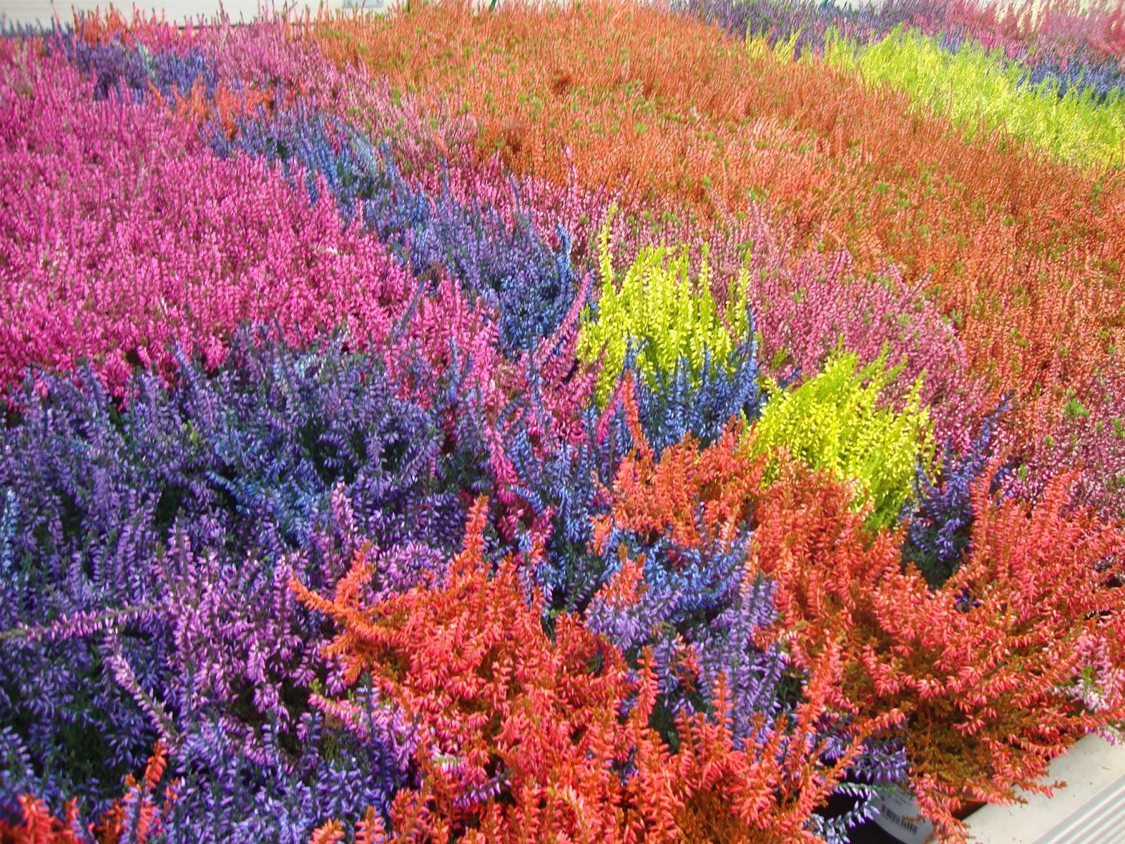 Un piccolo giardino in citt piante colorate con la for Piante colorate da giardino
