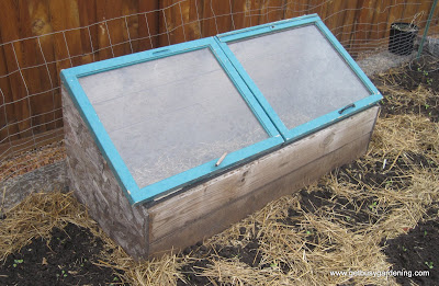 Cold frame in use