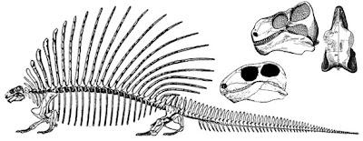 esqueleto y cráneo de Edaphosaurus