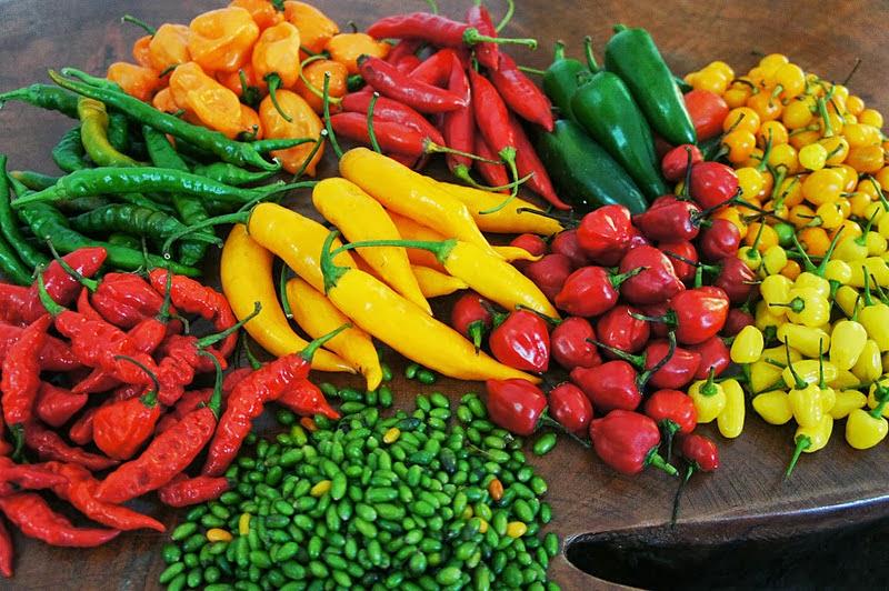 Resultado de imagem para imagens de pimentas