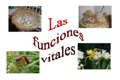 http://cplosangeles.juntaextremadura.net/web/edilim/tercer_ciclo/cmedio/las_funciones_vitales/las_funciones_vitales/las_funciones_vitales.html