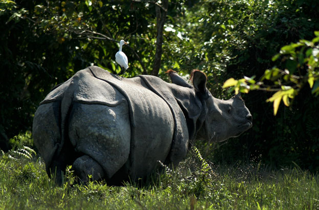 World Heritage Kaziranga National Park