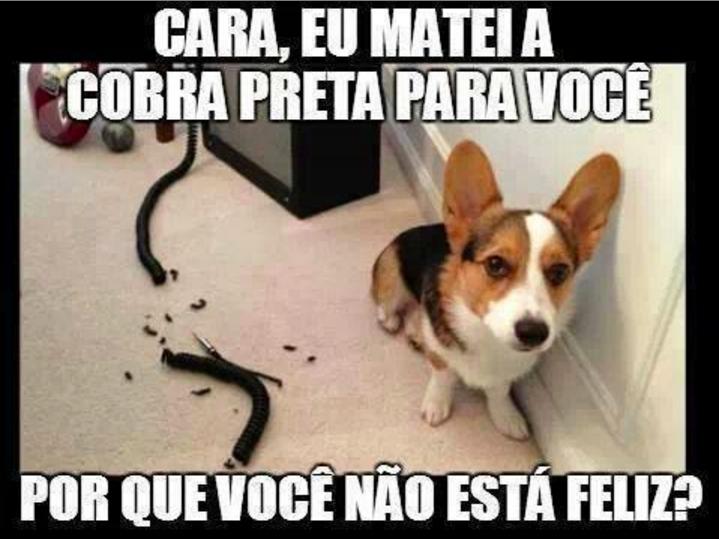 A fidelidade do cachorrinho