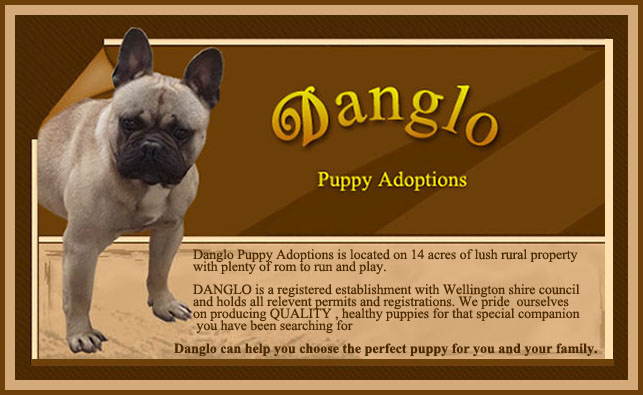 Danglo Puppies