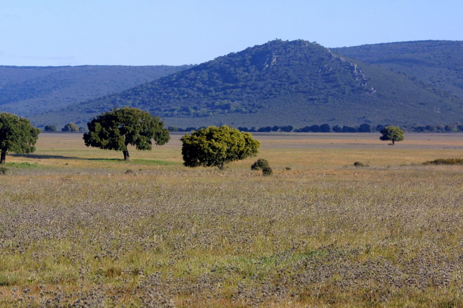 Geograf a de espa a los grandes conjuntos naturales espa oles for Clima mediterraneo de interior