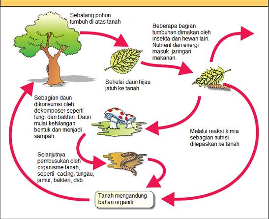 Bab vi makhluk hidup dalam ekosistem ilmu alamiah dasar gambar 5 diagram yang menunjukkan siklus dekomposisi pada ekosistem ccuart Gallery