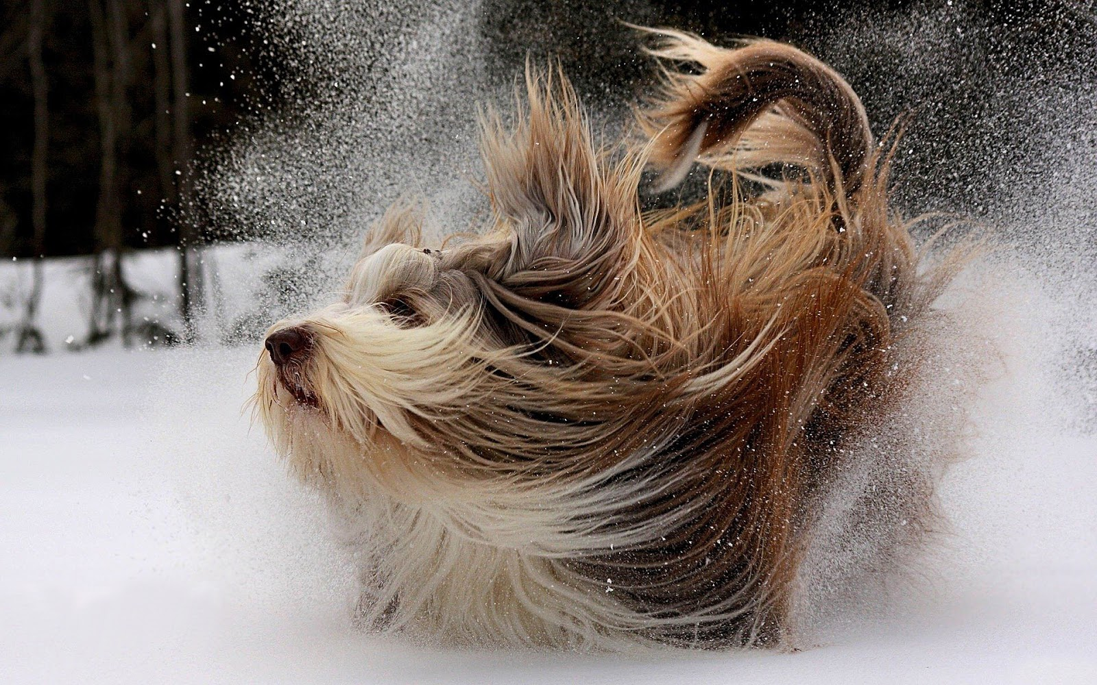 Dog wallpaper with a cute dog playing in the snow | HD winter ...