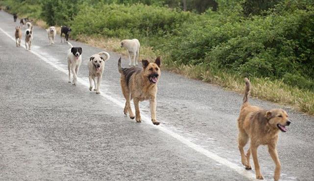 Θλιβερά και καταδικαστέα τα περιστατικά δηλητηρίασης αδέσποτων σκύλων στο Δοξάτο Δράμας