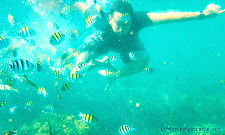 asiknya snorkelling di Taman laut Pangandaran