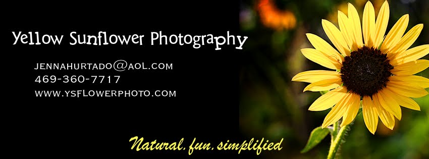 Yellow Sunflower Photography