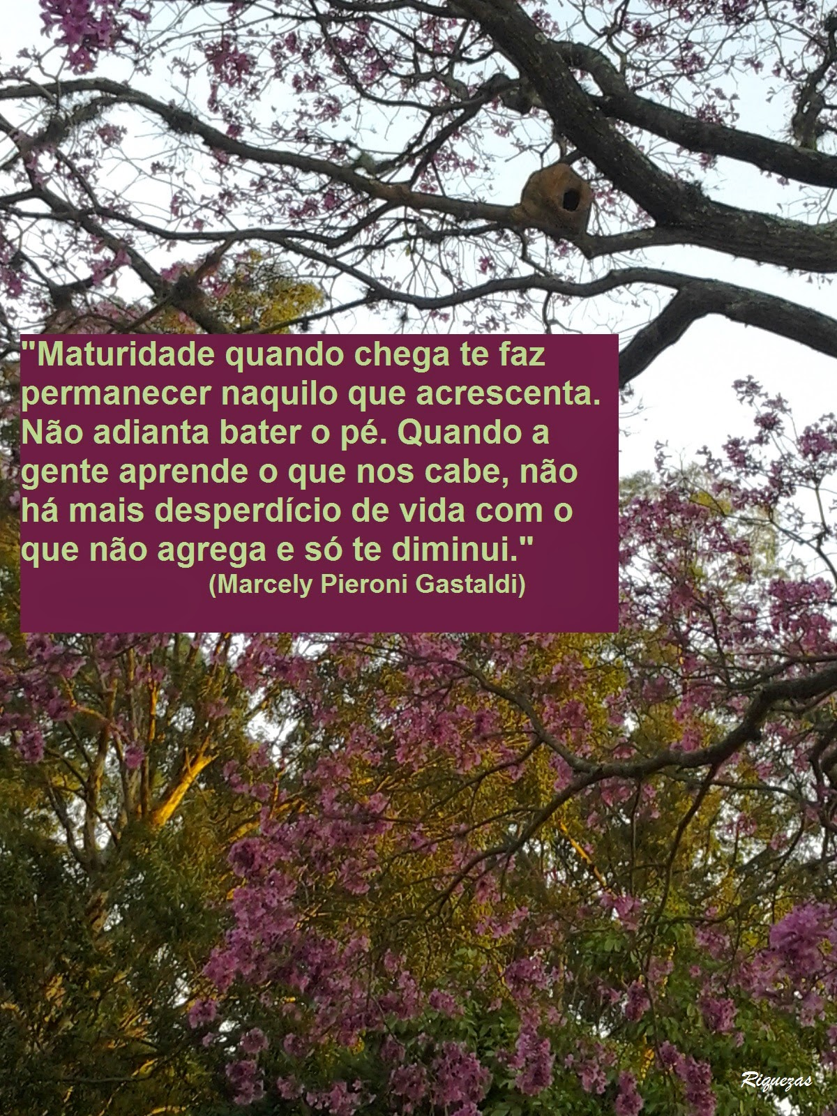 Foto tirada no Parque do Ibirapuera