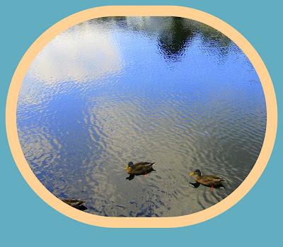 ca cancanne les canards  %253Bpetites%2Bfleurs%2B241