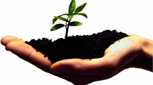 Lance a tua semente