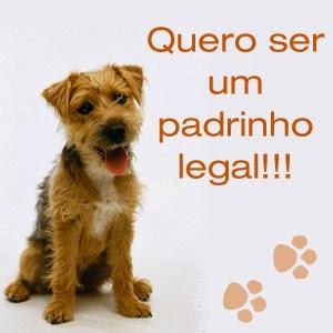 http://www.caosemdono.com.br/p/como-apadrinhar.html