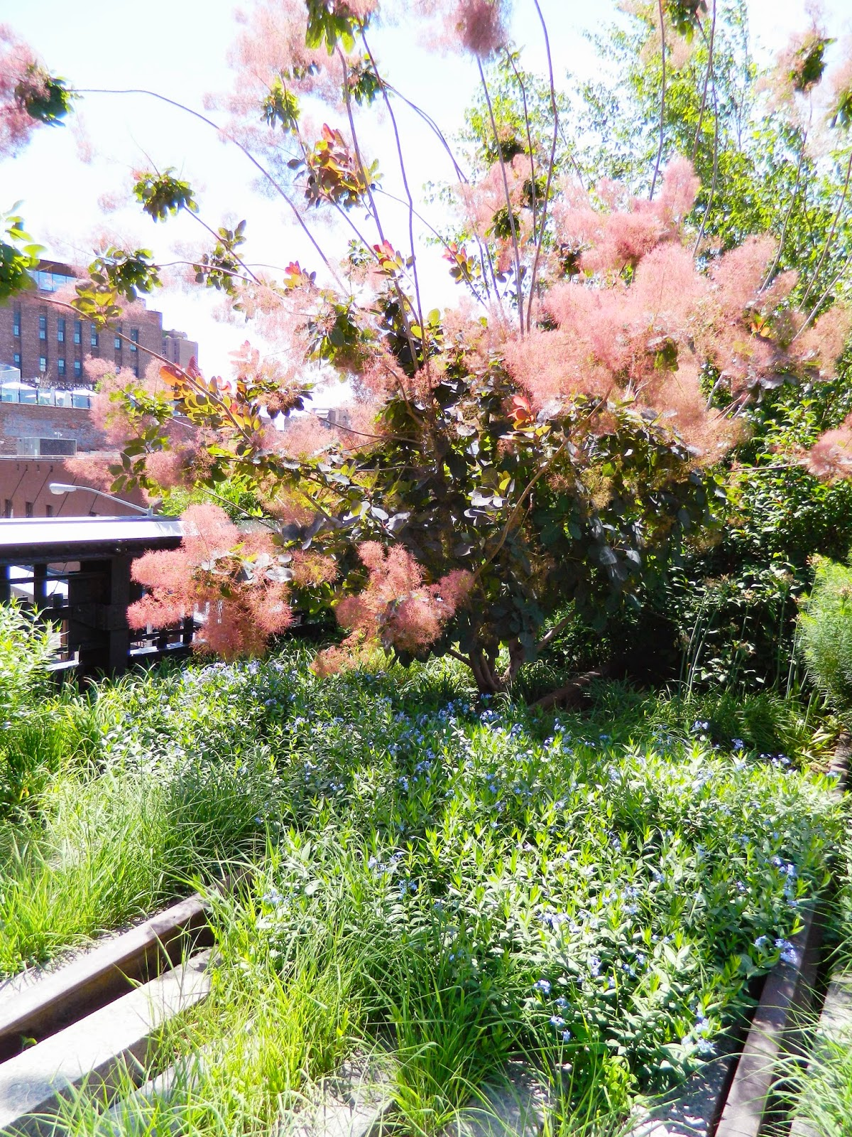 new york city high line trees tracks nature summer sunny pretty pink